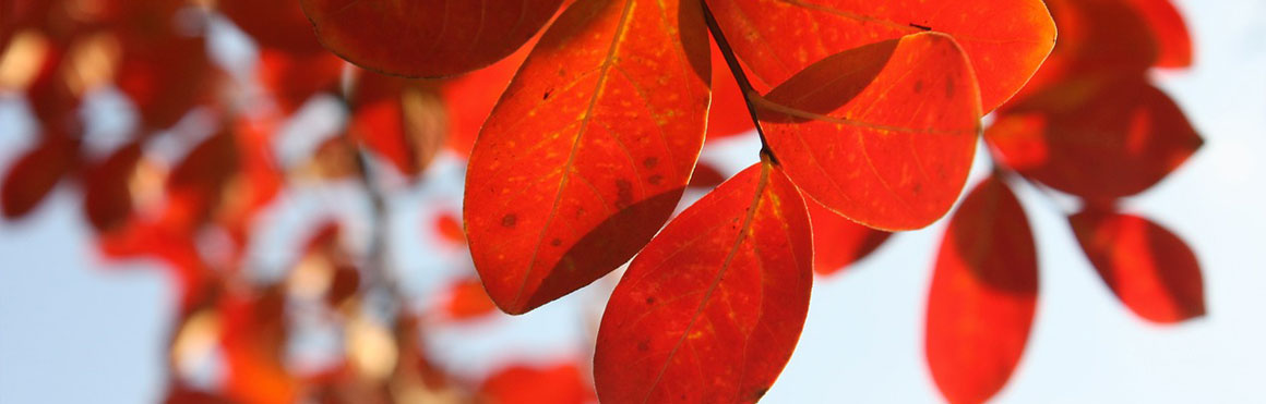 Thoughts on the Autumn Equinox North Shore Pain Management Blog Post